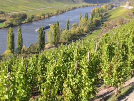 Weingut-St.Nikolaus-Hof-Mosel-Lage