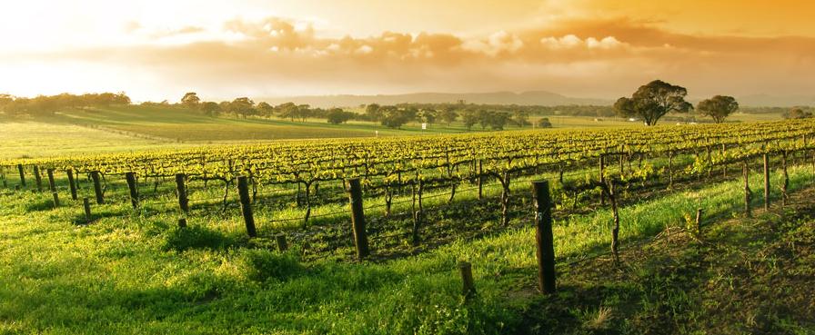 Alvarez Nölting - Weinlage in Spanien