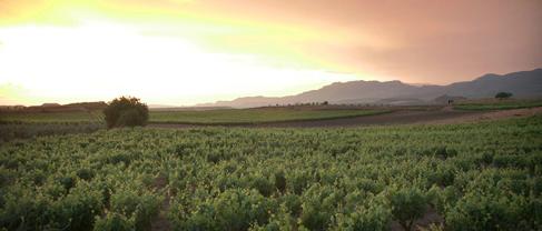 Bodegas-Navajas-Spanien-Rioja-Landschaft