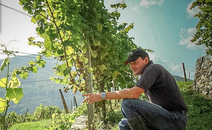 Martin Muthenthaler in seinem Weinberg - in Österreich-Wachau