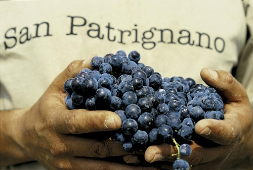 reifes-gesundes-Traubengut_San-Patrignano