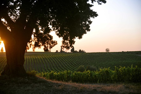 Weingut-Lornano__Italien_www.lornano.it